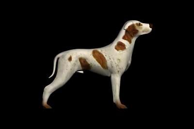 动物模型20