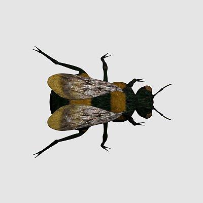 黄蜂 蜜蜂 Bumblebee