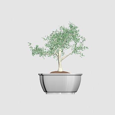 Plant-decor-tree