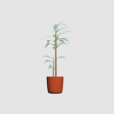 Plant_palm