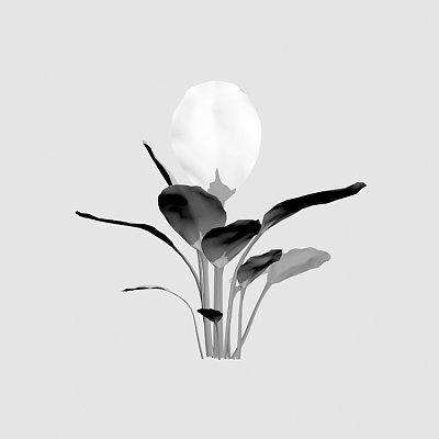 Flower_Calathea