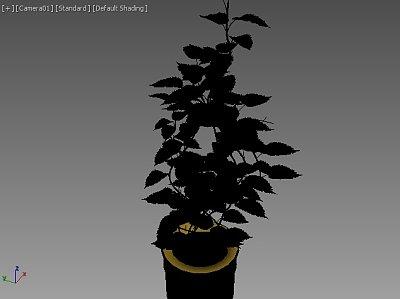 Plant_house