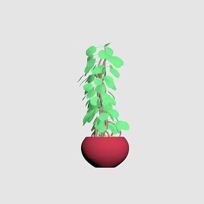 Plant_house-2