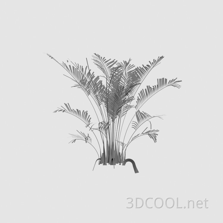 ornamental_plant