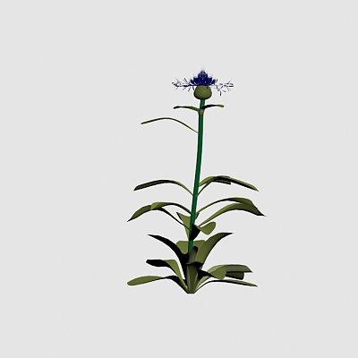 Flower_Blue_Bachelor_Button