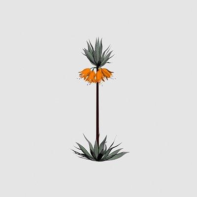 Flower_Crown_Imperial_Fritillaria