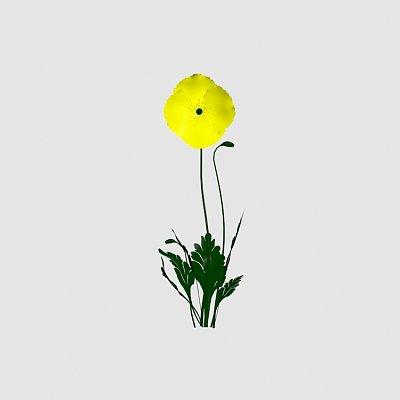 Flower_Iceland_Poppy