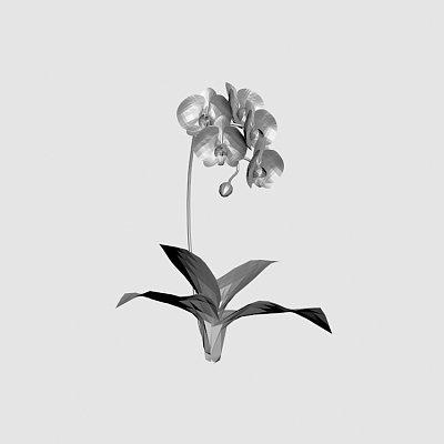 Flower_Kotyou