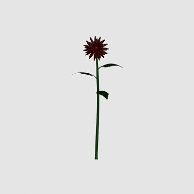 Flower_Velvet_Queen_Helianthus