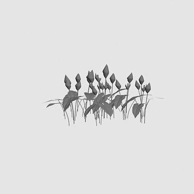 Flower_calla_palustris